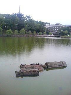 雨の猿沢池/興福寺