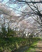 千本桜エモーショナル
