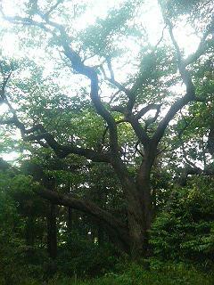 峯山(鎌倉市・広町緑地)